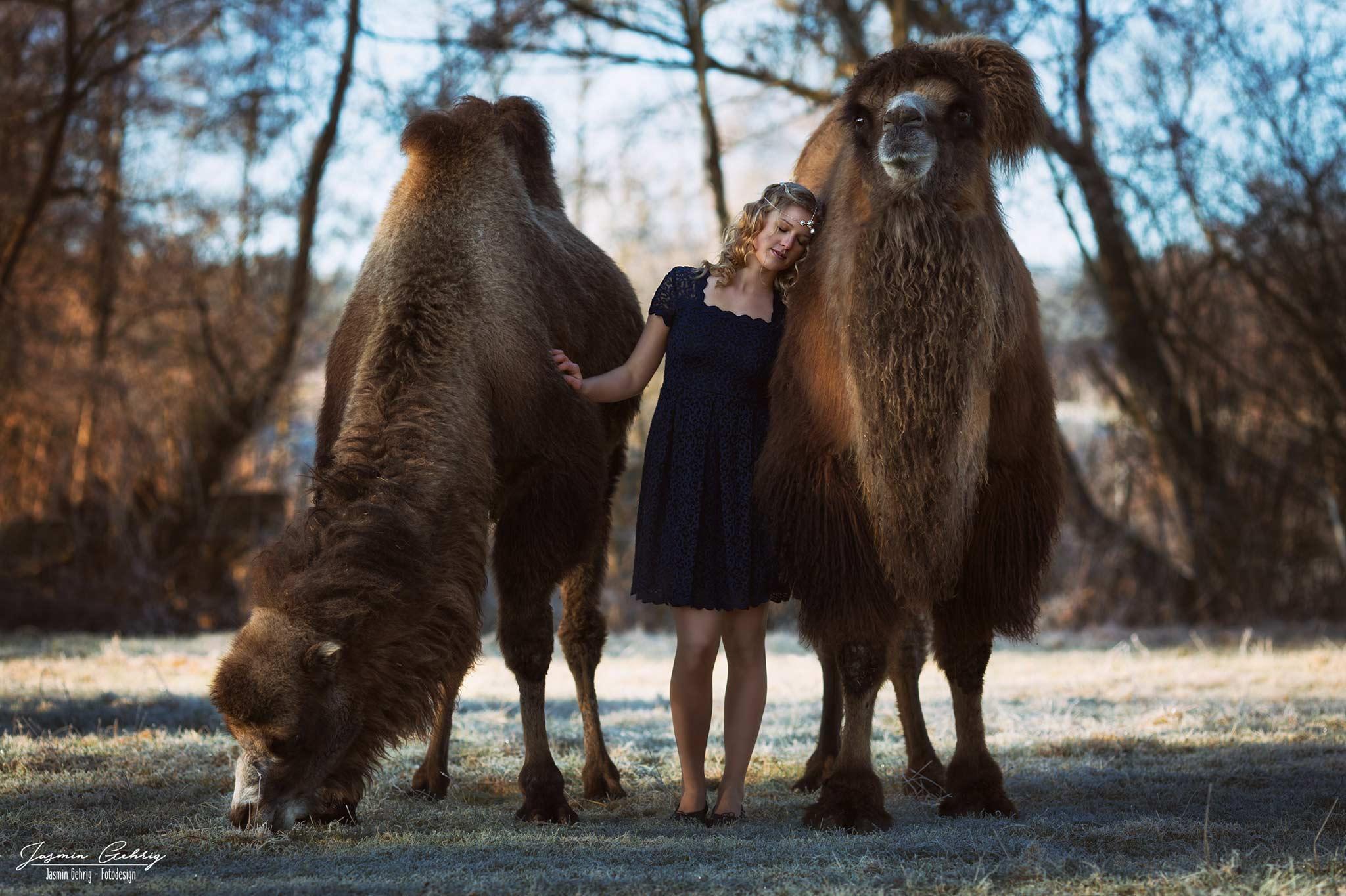 Sieglinde und die Kamele